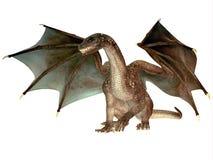 Dragão irritado Imagem de Stock Royalty Free