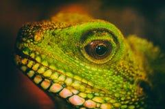 Dragón de agua verde Imagenes de archivo