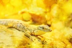 Dragón de oro Imagenes de archivo