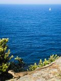 Dragón del mar Imágenes de archivo libres de regalías
