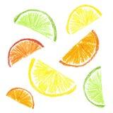 Dragen citrus skiva för färgpenna ungar Fotografering för Bildbyråer
