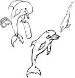 Dragen delfinuppsättninghand arkivbild