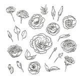 Dragen elegant lisianthus för vektor hand royaltyfri illustrationer