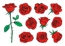 Dragen färguppsättning för röda rosor hand vektor Stock Illustrationer