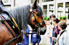 Dragen häst och gångare Royaltyfri Fotografi