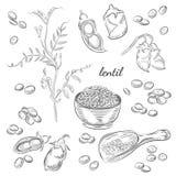 Dragen illustration för linsväxt hand stock illustrationer
