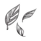 Dragen illustration för tebladvektor hand Tebladsymbol Arkivbild