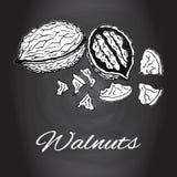 Dragen krita skissar konst för kök för valnötvektor svartvit Royaltyfria Bilder