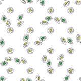 Dragen modell för tusensköna hand på vit bakgrund också vektor för coreldrawillustration Royaltyfria Bilder