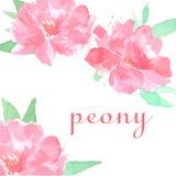Dragen rosa pion för vattenfärg hand stock illustrationer