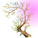 Dragen Sakura hand också vektor för coreldrawillustration Arkivfoton