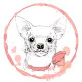 Dragen stående för Chihuahua hand i rosa färgram Royaltyfria Foton