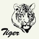 Dragen tigerhuvudhand Tigern skissar isolerad bakgrund Stiliserad haired inskrifttiger Royaltyfri Fotografi
