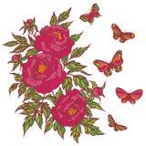 Dragen upp konturerna av rosa grupp av pionblomma och fjärilar Royaltyfri Fotografi