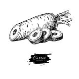 Dragen vektorillustration för morot hand Isolerat grönsak inristat skivat objekt stock illustrationer