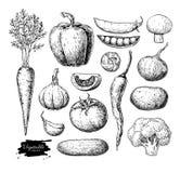 Dragen vektoruppsättning för grönsak hand Isolerad vegetarian inristad st stock illustrationer