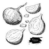 Dragen vektoruppsättning för lök hand Mycket halva- och utklippskiva Isolerat grönsak inristat stilobjekt stock illustrationer