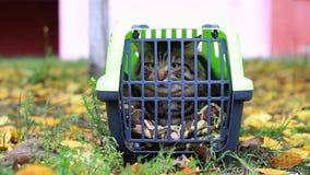 Drager met een kat stock footage