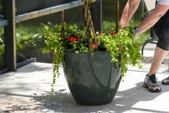 Dragging Flower Garden Pot Preparation Stock Images