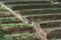 Draghi del Vietnam che si intrecciano Fotografie Stock Libere da Diritti