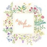 Dragit kort för ört hand Royaltyfria Foton