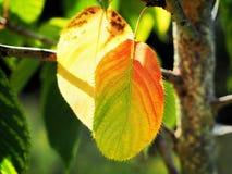 Dragningar av hösten royaltyfri bild