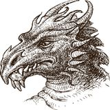 Drago Fotografia Stock