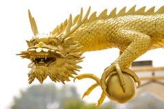 Drago dorato Fotografia Stock