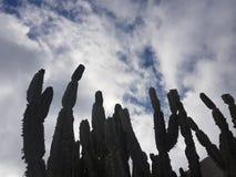 Drago hermoso en Lanzarote, Espa?a imagenes de archivo