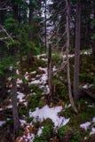 Dragobrat乌克兰 高山风景滑雪胜地 免版税库存图片
