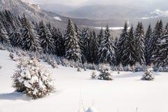 dragobrat χειμώνας της Ουκρανίας βουνών τοπίων Στοκ Εικόνες