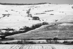 dragobrat krajobrazowa halna Ukraine zima Obraz Stock