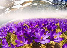 Dragobrat, the spring Carpathians. Spring in the Ukrainian Carpathians against the backdrop of wild snow tops and frosted spruces are shelters and ski slopes Royalty Free Stock Image