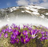 Dragobrat, the spring Carpathians. Spring in the Ukrainian Carpathians against the backdrop of wild snow tops and frosted spruces are shelters and ski slopes Royalty Free Stock Images