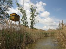 Dragoman Swamp reed and Bird Observation Tower through it. Bulgaria Hot summer holiday vacations Stock Images