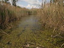 Dragoman Swamp reed. Birds and nature. Bulgaria Hot summer holiday vacations. Habitats stock photography