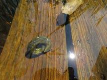Dragoman Swamp reed and a snail. Bulgaria Hot summer holiday vacations stock image