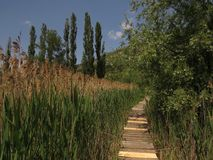 Dragoman Swamp reed and wooden path through it. Bulgaria Hot summer holiday vacations Stock Photo