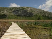Dragoman Swamp reed and wooden path through it. stock photography