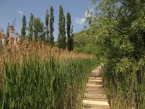 Dragoman Swamp reed and wooden path through it. Bulgaria Hot summer holiday vacations royalty free stock photography