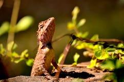 Dragon. Mini dragon in the morning Royalty Free Stock Photo