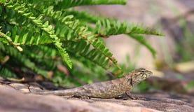Dragon Photographie stock libre de droits