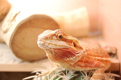 Free Dragon Royalty Free Stock Images - 41060969