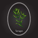 Dragon aromatisk kökört Royaltyfri Illustrationer