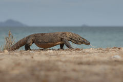 Dragon on the beach Royalty Free Stock Images