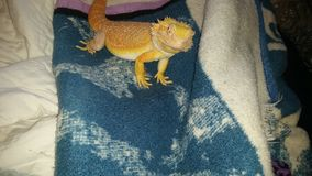 Dragon photos stock