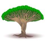 Dragon Blood Tree estilizado Fotografia de Stock Royalty Free