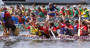 Dragon boat focus on steersman. SAINT JOHN, CANADA - AUGUST 28: A steersman or sweep is the focus of this race at the Saint John Dragon Boat Festival, a Royalty Free Stock Photo