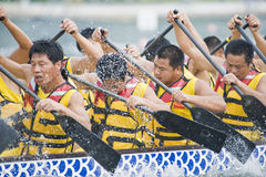 Dragon Boat Race Paddlers Stock Image