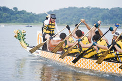 Dragon Boat Race Paddlers Royalty Free Stock Image